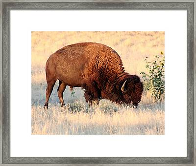 Grassland Giant Framed Print by Bob Bahlmann