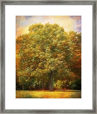 Graves Grove Framed Print by Jai Johnson
