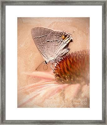 Gray Hairstreak Butterfly Framed Print by Betty LaRue