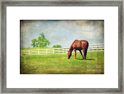 Grazing Framed Print by Darren Fisher