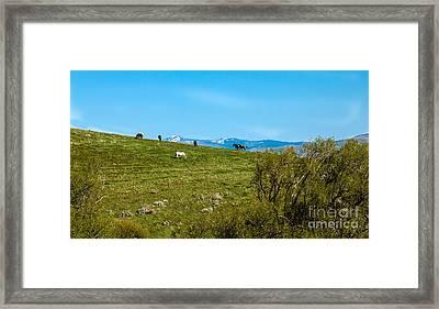 Grazing Horses Framed Print by Robert Bales