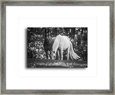 Grazing In Black And White Framed Print by Brian Wallace