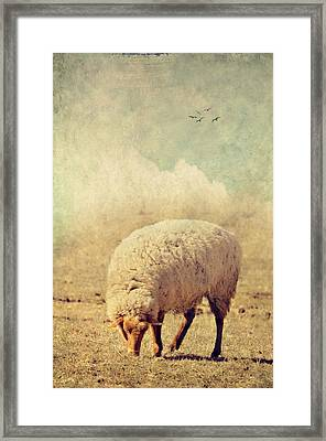 Grazing Sheep Framed Print by Kathy Jennings