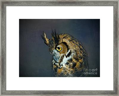 Great Horned Owl Framed Print by Betty LaRue