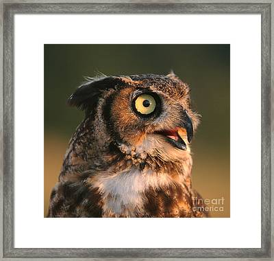 Great Horned Owl Framed Print by Clare VanderVeen