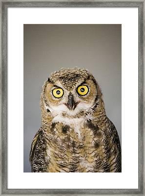 Great Horned Owl Framed Print by Henry Georgi Photography Inc