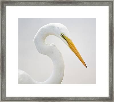 Great White Egret In Deep Thought Framed Print by Paulette Thomas