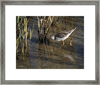 Greater Yellowlegs At Spi Framed Print by Roena King