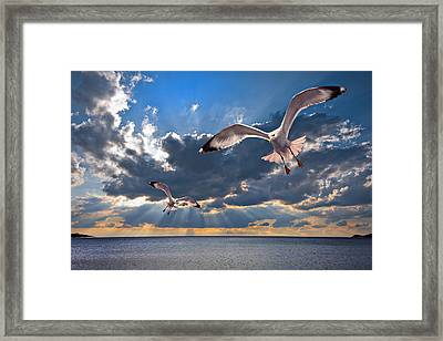 Greek Gulls With Sunbeams Framed Print by Meirion Matthias