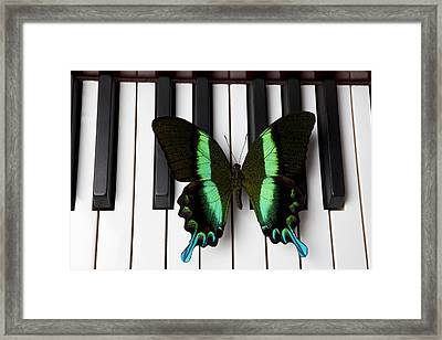 Green And Black Butterfly On Piano Keys Framed Print by Garry Gay