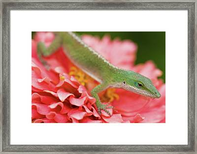 Green And Pink In Garden Framed Print by Jeff R Clow