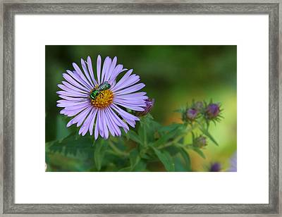Green And Purple Framed Print by Doris Potter