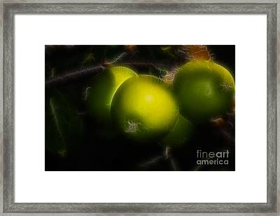 Green Apples  Framed Print by Marjorie Imbeau
