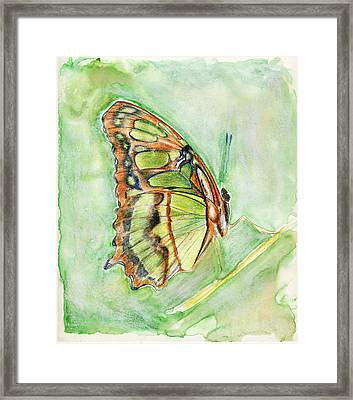 Green Butterfly Framed Print by Linda Pope