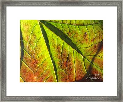 Green Days Past Framed Print by Trish Hale