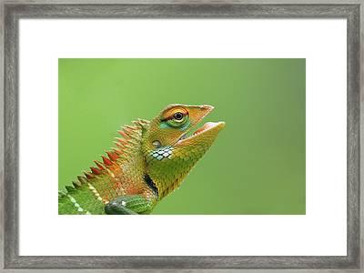 Green Forest Lizard Framed Print by Saranga Deva De Alwis
