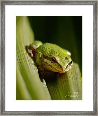 Green Frog 2 Framed Print by Mitch Shindelbower