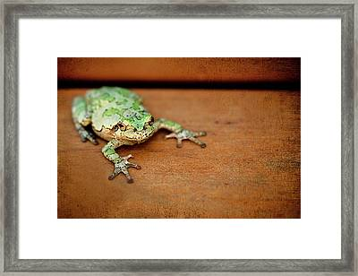 Green Frog With Gold Rimmed Black Eyes Framed Print by R. Nelson