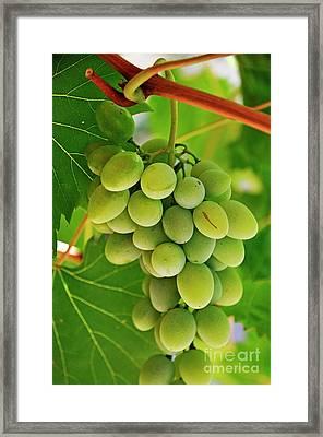 Green Grape And Vine Leaves Framed Print by Sami Sarkis