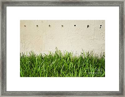 Green Grass Against Wall Framed Print by Blink Images