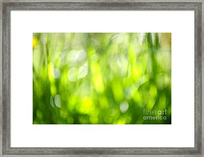 Green Grass In Sunshine Framed Print by Elena Elisseeva
