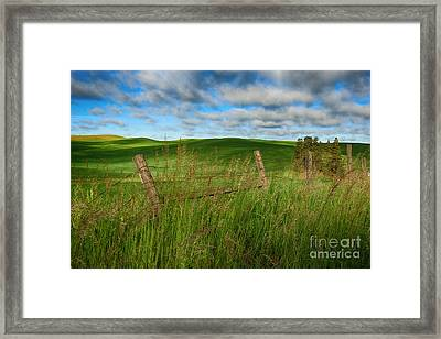 Green Green Grass Of Home Framed Print by Beve Brown-Clark Photography