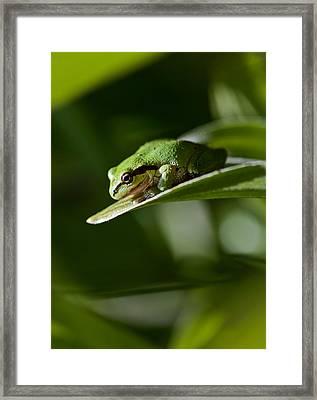 Green Framed Print by Mitch Shindelbower