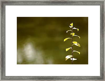 Green Morning Framed Print by LeeAnn McLaneGoetz McLaneGoetzStudioLLCcom