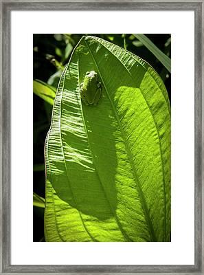 Green On Green Framed Print by Albert Seger