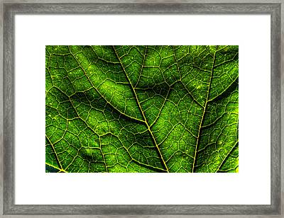 Green Pumpkin Leaf Framed Print by Matt Dobson