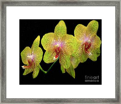 Green Spotted Orchids Framed Print by Merton Allen