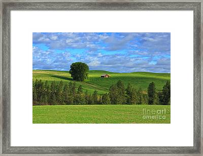 Greener Pastures Framed Print by Beve Brown-Clark Photography
