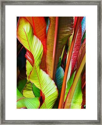 Greenhouse Palms 2 Framed Print by Stephen Mack