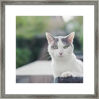 Grey And White Cat Framed Print by Cindy Prins