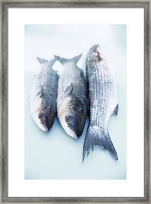 Grey Mullet Framed Print by Veronique Leplat