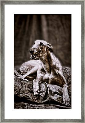 Greyhound Framed Print by Mary Morawska