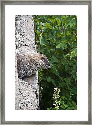 Groundhog Day Framed Print by Bill Cannon