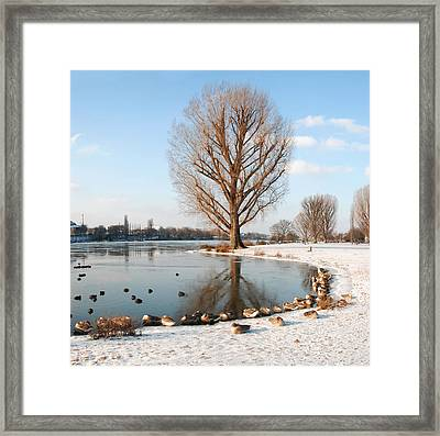 Group Of Geese Huddled Together Framed Print by Richard Fairless