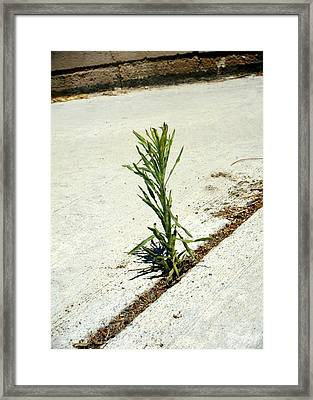 Growing Up In The Streets Of Las Vegas Framed Print by Bruce Iorio