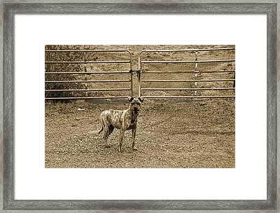 Guard Dog Framed Print by Steven  Michael
