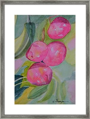 Gulf Ruby Plums Framed Print by Warren Thompson