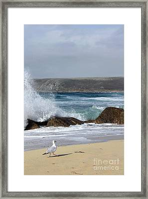 Gull On The Sand Framed Print by Linsey Williams