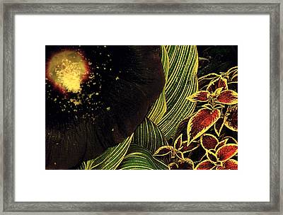 Half Fake Framed Print by Chris Berry