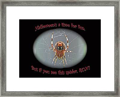 Halloween Card - Marbled Orb Weaver Spider Framed Print by Mother Nature