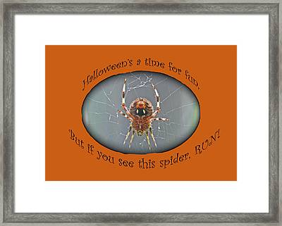 Halloween Greeting Card - Marbled Orb Weaver Spider Framed Print by Mother Nature