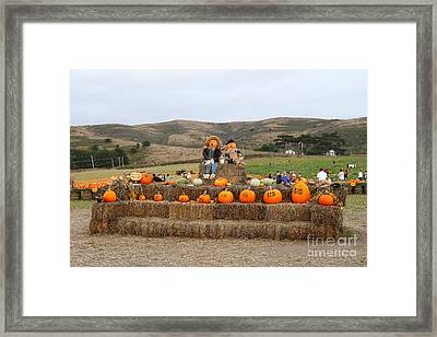 Halloween Pumpkin Patch 7d8478 Framed Print by Wingsdomain Art and Photography
