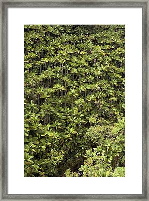 Hamakua Palms Framed Print by Peter French