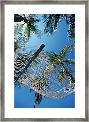 Hammock And Palm Tree, Great Barrier Framed Print by Ron Watts