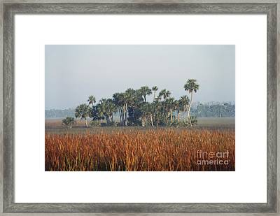 Hammock, Everglades National Park Framed Print by Robert Ashworth