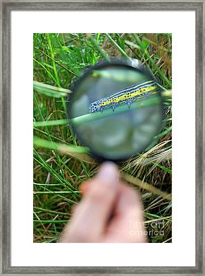 Hand With Magnifying Glass Looking At A Worm On Grass Framed Print by Sami Sarkis